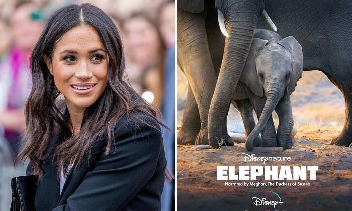 Elephant - a Disney+ docuseries